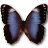 Morpho Butterfly Icons Collection Morpho Butterfly Pack Free Download