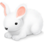 http://www.veryicon.com/icon/64/Holiday/Easter/Bunny.png