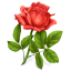 http://www.veryicon.com/icon/64/Holiday/Gifts/Rose.png