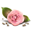 http://www.veryicon.com/icon/64/Love/Gentle%20Romantic/Rose.png