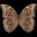 Morpho Didius Underside.png (128×128)