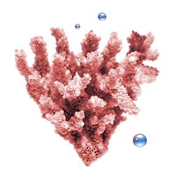 Coral icon free download as PNG and ICO formats, VeryIcon.com